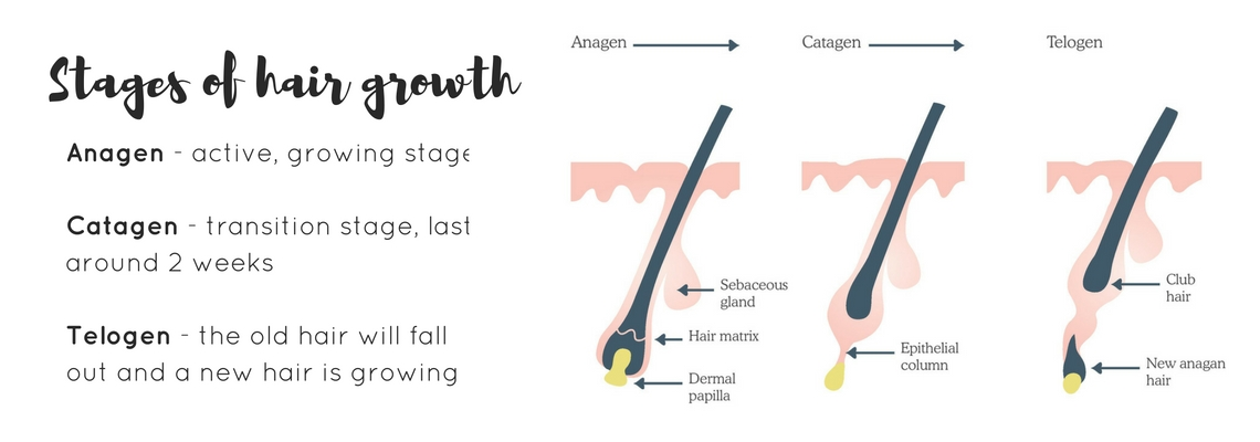 electrolysis williamstown hair growth stages